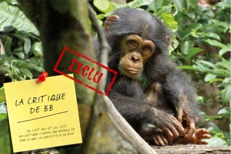 [EXCLU] La critique de BB : Chimpanzés
